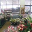 花に囲まれた特等地、でも